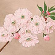 Ichi-yo - Single Leaf - Vintage Japan Watercolor Poster