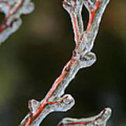 Icy Branch-7512 Poster