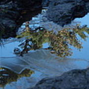 Icy Evergreen Reflection Poster