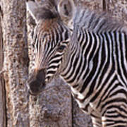 Idaho Falls - Tautphaus Park Zoo Poster