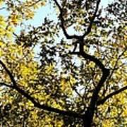 Illuminated Oak Tree Poster