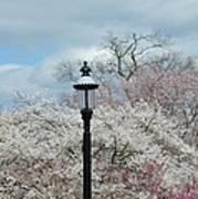 Illuminating Blossoms Poster