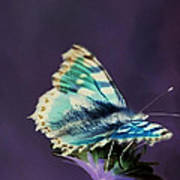 Imaginary Butterfly Poster