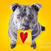 Imploring Staffie With A Sticky Note On His Mouth Poster