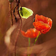 Impression With Red Poppies Poster