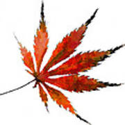 Impressionist Japanese Maple Leaf Poster