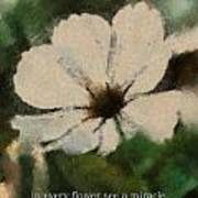 In Every Flower See A Miracle 03 Poster
