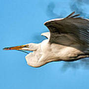 In Flight With Stick Poster