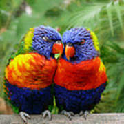 In Love Lorikeets Poster