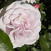 In The Rose Garden Poster