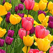 In The Tulip Garden Poster