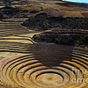 Inca Crop Circles At Moray Poster