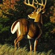Whitetail Buck - Indecision Poster