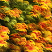 Indian Blanket Psychedelic Poster
