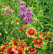 Indian Blankets And Lemon Horsemint Poster
