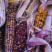 Indian Corn Harvest Poster