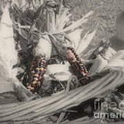 Indian Corn In Basket Partial Color Poster