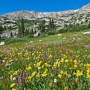 Indian Peaks Wildflower Meadow Poster
