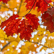 Indian Summer Trees Poster