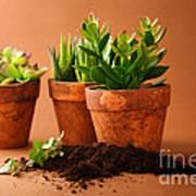 Indoor Plant Poster