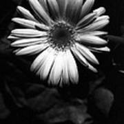 Infrared - Flower 05 Poster