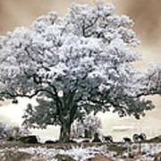 Infrared Tree On A Hill In Gettysburg Poster by Paul W Faust -  Impressions of Light
