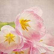Inner Beauty - Pink Tulips Poster
