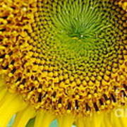 Inner Peace Forms Within This Sweet Yellow Sunflower Poster