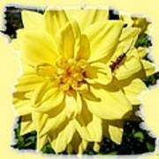 Insect On A Dahlia Poster