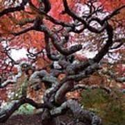 Inside The Japanese Maple Poster