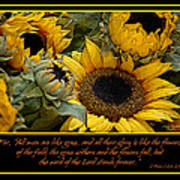 Inspirational Sunflowers Poster