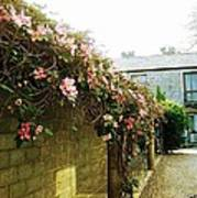 Ireland Floral Vine-topped Brick Wall Poster