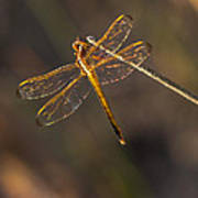Iridescent Dragonfly Wings Poster