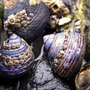 Iridescent Purple Seashells Poster