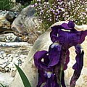 Iris 14 Poster