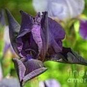 Iris 9 Poster