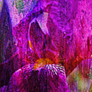 Iris Abstract Poster by J Larry Walker