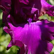 Iris Entry Poster by Christine Burdine