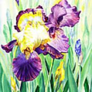 Iris Flowers Garden Poster