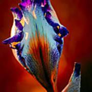 Iris In Red Poster by Tomasz Dziubinski