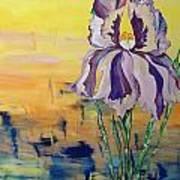 Iris Poster by Karen Carnow