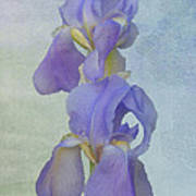 Iris Texture Poster