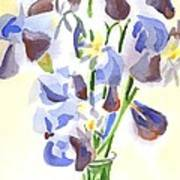 Irises Aglow Poster by Kip DeVore