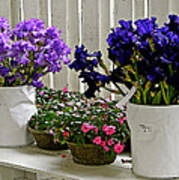 Irises And Impatiens Poster
