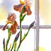 Irises In The Window Poster