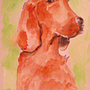 Irish Setter Poster by Sidney Holmes