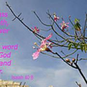 Isaiah 40 8 Poster