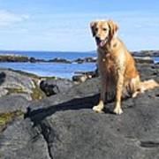 Island Dog Poster