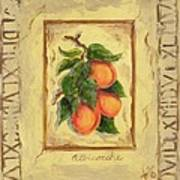 Italian Fruit Apricots Poster by Marilyn Dunlap