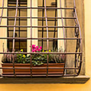 Italian Window Box Poster